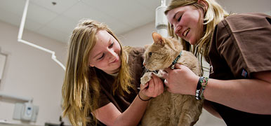 Veterinary Technician Program